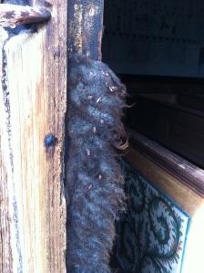 riddarskinnbagge på dörr